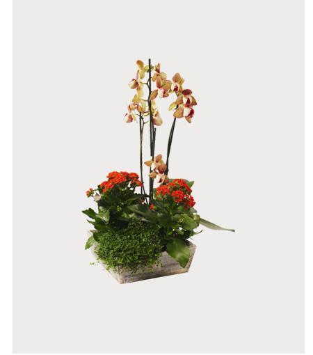 Caixa com plantas